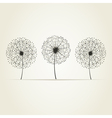 Three dandelions vector image