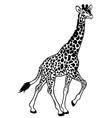 giraffe black white vector image vector image