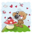 cute cartoon teddy bear with a camera vector image