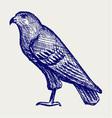 Hawk vector image