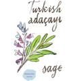 watercolor sage vector image