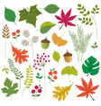 leaves clipart vector image