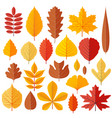 set of tree autumn leaves isolated on the white vector image