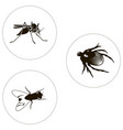 insects set including bug fly and mosquito vector image