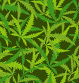 Cannabis leafs seamless pattern background of vector image