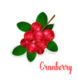 cranberry fruit bunch with green leaf cartoon icon vector image
