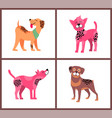 Dogs of pure breeds isolated set vector image