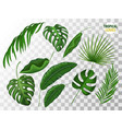 tropical leaves realistic set vector image