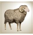 Realistic Sheep vector image