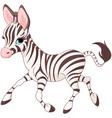 baby zebra vector image vector image