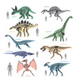 dnosaurs seletons silhouettes bone animal and vector image