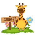 cute giraffe in garden vector image