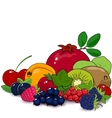 Summer Fruits and Berries vector image