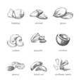 nuts set in hand drawn style vector image
