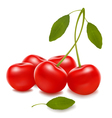 group with red cherries vector image