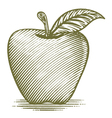 Woodcut Ripe Apple vector image