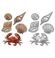 crab and shell isolated on white background vector image