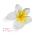 Balinese flower frangipani on isolated white vector image
