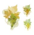 white wine grape green natural color grape vector image