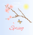 Spring twig of cherry and butterfly vector image
