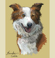 Border collie red color vector image