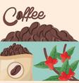 coffee beans tree sac fresh vector image