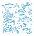 set of seafood vector image