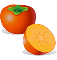 persimmon - vector image