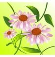 Echinacea vector image