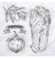 Vegetables onion napa cabbage olives vintage vector image vector image