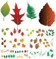leaf collection vector image