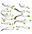 Tree branch and leaves set vector image vector image