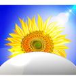 Peeking Sunflower Ornamental Design vector image