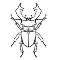 beetle deer horned beetle big insect line art vector image