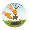 Hands planting sapling in garden vector image