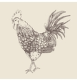 Vintage design with rooster vector image