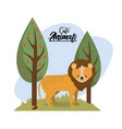 cute lion animal to natural wildlife vector image