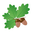 Acorns With Oak Leaves in Summer Isolated Objects vector image vector image
