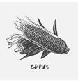 Corn cobs vegan vector image