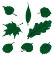 Leaf Set vector image