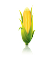 object corn vector image