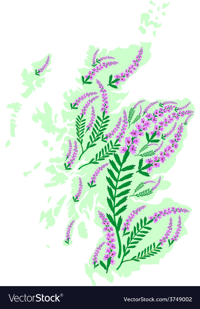 Image map of scotland with heather flowers vector