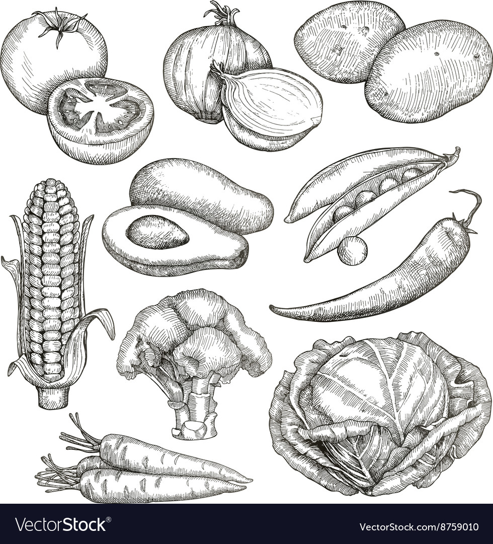 Vegetables sketches hand drawing set vector