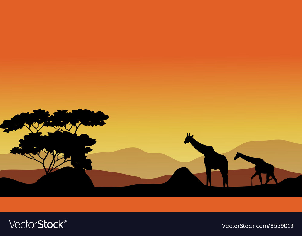 Giraffes on the hills vector