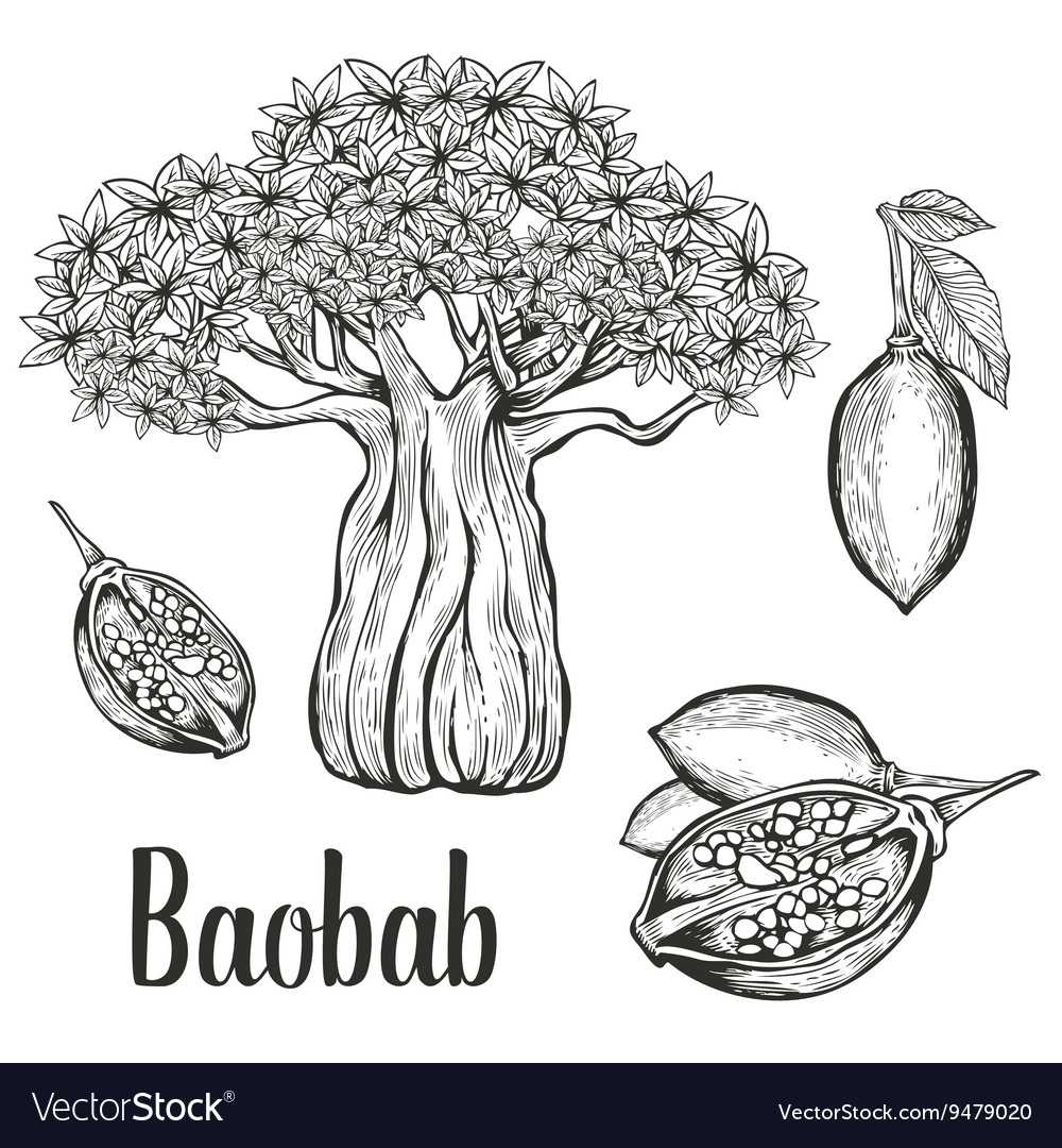 Baobab icon set vector