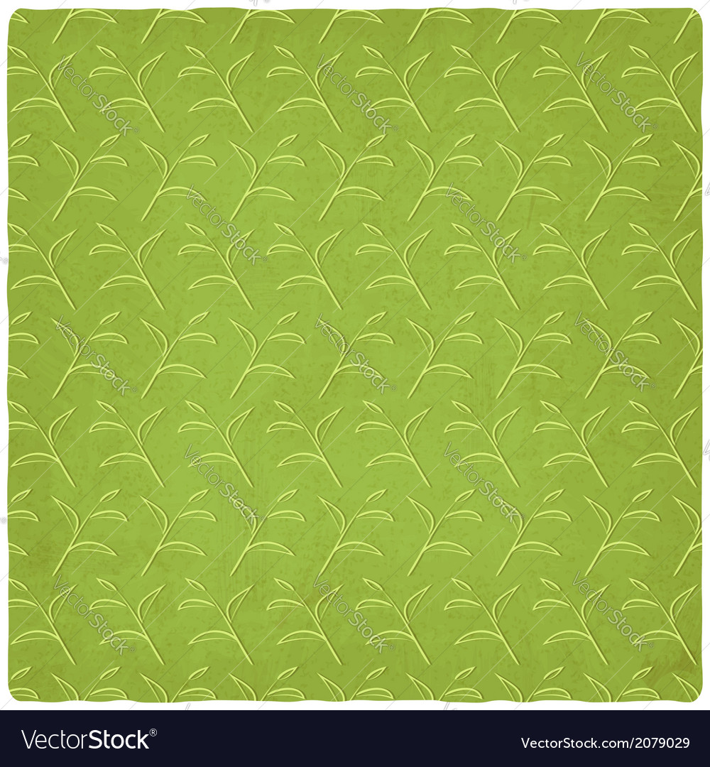 Green tea old background vector