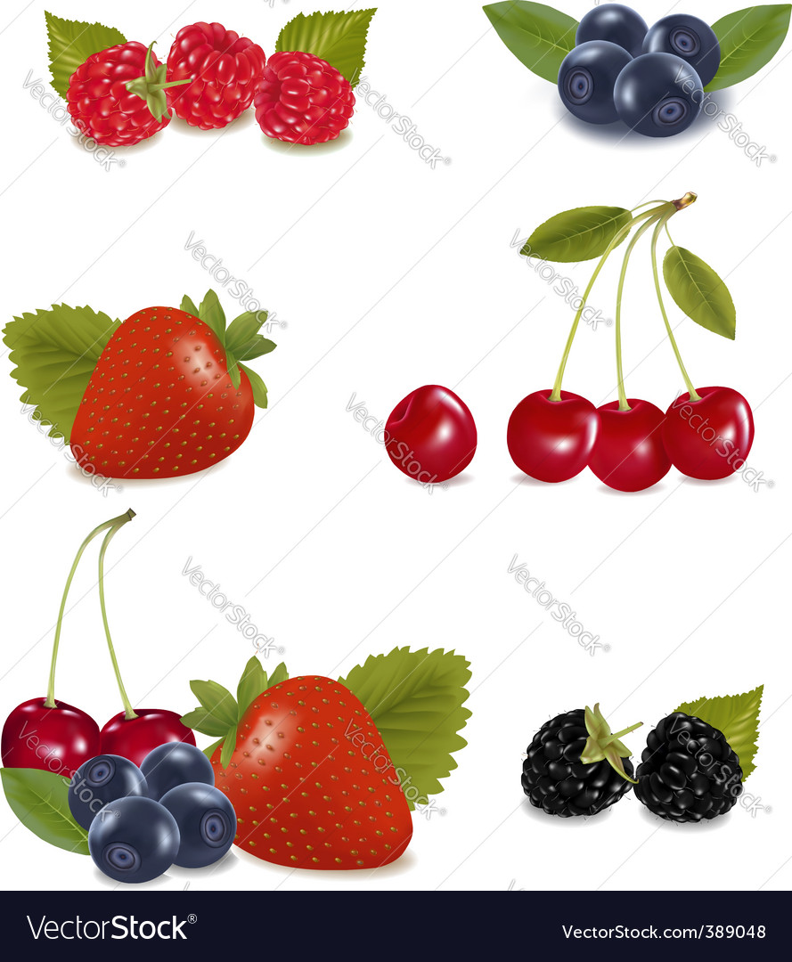 Berries vector