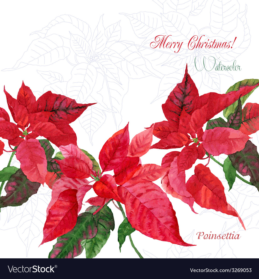 Background with red christmas poinsettia04 vector