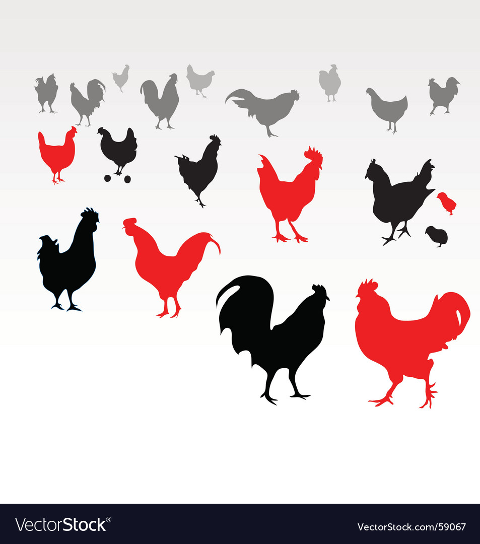 Chicken life vector