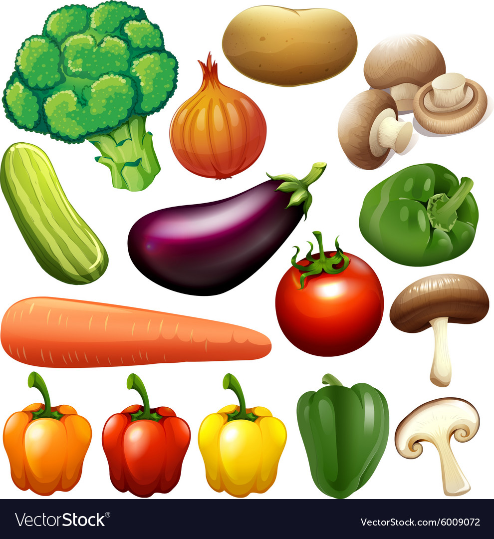 Different kind of fresh vegetables vector